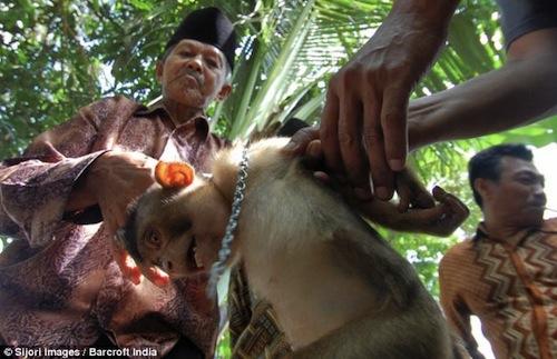 vegworld-coconut-oil-monkey-5