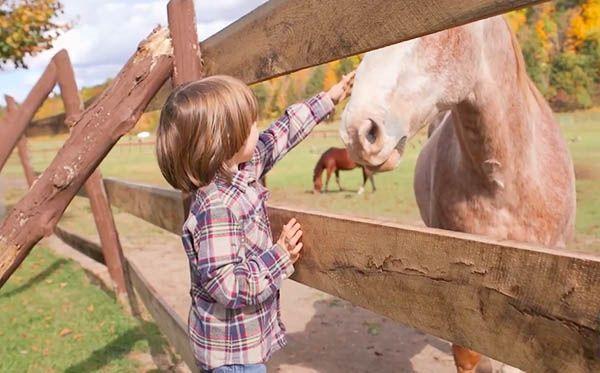 ベジタリアンの子供 馬
